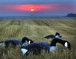 August Goose Hunting in ND