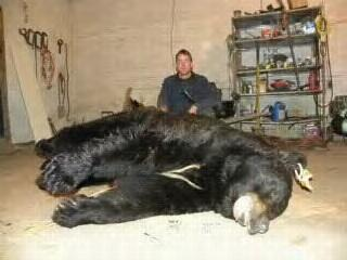 744 Pound PA Black Bear Taken with Crossbow