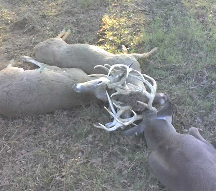 Three Locked Bucks