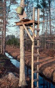 Wooden Treestand for Whitetails